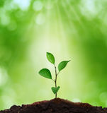 New life.Sprout in green background. Royalty Free Stock Photos