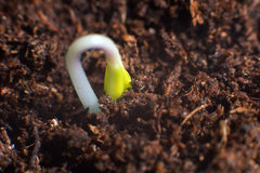 New life start. New beginnings. Plant germination on soil. Royalty Free Stock Photos