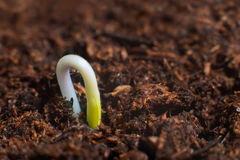 New life start. New beginnings. Plant germination on soil. Royalty Free Stock Photography