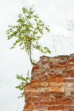 New life/tree grows from a stone Royalty Free Stock Photos