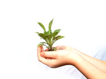 New life was borned. Small new flower getting to be planted, holded carefully by a girl hand royalty free stock photos