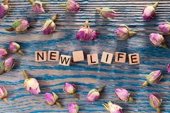 New life on wooden cube. The words new life write on wooden cubes with rose bud on blue color wood background royalty free stock photos