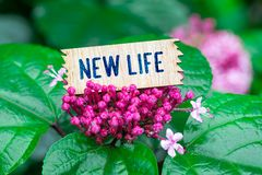New life in wooden card. New life word in broken wooden card on beautiful flower at the rain stock image