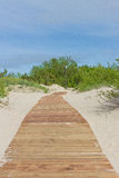 New light brown planks boardwalk in white sand dunes. New light brown planks boardwalk in white sand dunes of Baltic sea Stock Image