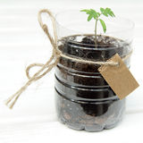 New little green tree Royalty Free Stock Image