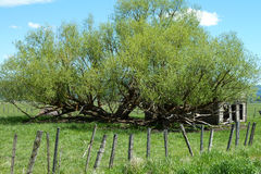 New Meadows, Idaho Historical Barn. Ancient tree, pioneers, historical home, pioneer homestead stock photography