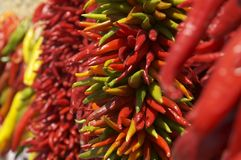 New Mexico Chili Ristras Royalty-vrije Stock Foto's