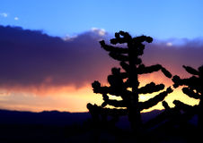 New Mexico Desert Cactus Sunset. American southwest desert cactus silhouette set against a beautiful colorful sunset sky of orange, yellow, purple, and blue royalty free stock photo