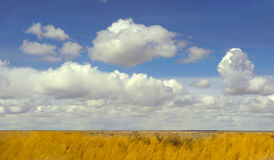 New Mexico Field Stock Images