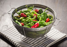 New Mexico Green and Red Chile Peppers in Colander Stock Photos