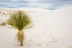 New Mexico Landscapes. Amazing and interesting landscapes from New Mexico USA stock photo