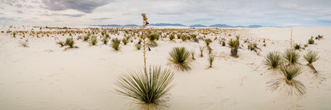 New Mexico Landscapes Stock Photo
