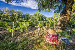 New Mexico Vineyard Royalty Free Stock Photo