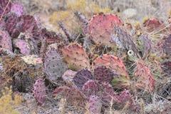 New Mexiko-Land Kaktus des New Mexiko rotes Stockbild