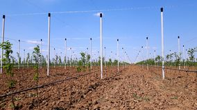 New modern apples growing site Stock Photo