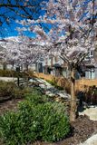 New modern low rise apartment complex on a sunny spring day with blooming sakura trees. New low rise appartament complex on a sunny spring day with blooming royalty free stock photos