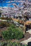 New modern low rise apartment complex on a sunny spring day with blooming sakura trees. New low rise appartament complex on a sunny spring day with blooming royalty free stock photo