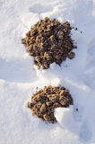 New molehills in the garden on snow Royalty Free Stock Photo