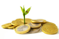 New money growth. New growth from Euro coins - financial concept Stock Photos