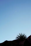 New Moon. Peaking just before sunset on hiking trail in Red Rock Canyon National park Stock Image