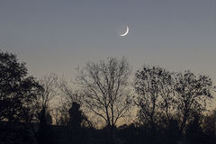 New Moon Waxing over trees Stock Photos