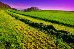 New-mown Hay Stock Photos