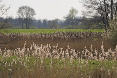New nature in the Achterhoek Stock Photography