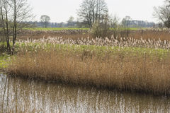 New nature in the Achterhoek Royalty Free Stock Photography