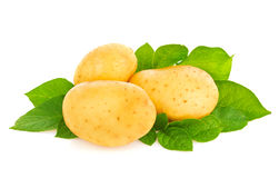 New organic potatoes with green leaf Stock Images