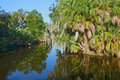 New Orleans Bayou. Lush summer greenery in the swamps of New Orleans royalty free stock photos