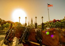 New Orleans häst och barnvagn royaltyfri fotografi