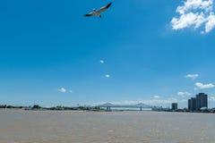 NEW ORLEANS LOUISIANA - APRIL 10, 2016: Cityscape av New Orleans med Mississippi River FlygSeagull i bakgrund Arkivbilder