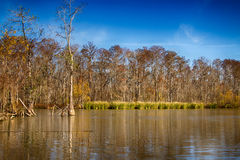 New Orleans Swamps Royalty Free Stock Image