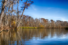 New Orleans Swamps Stock Images