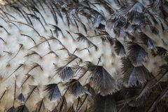 New Ostrich Feathers Royalty Free Stock Images