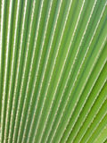 New palm leaf texture. As natural background Royalty Free Stock Photography