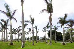 New palm trees Royalty Free Stock Photo
