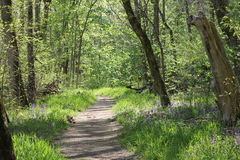 ...on a new path. Wooded path filled with sunlight and wildflowers Royalty Free Stock Images