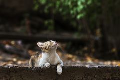2018 new photo, adorable colorful stray cat. Daily street cat photo. Adorable street kitty looks at sky and thinks about something, small and cute stock photography