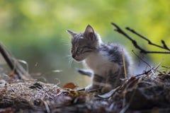 2018 new photo, cute stray cat looks at somewhere. 2018 new photo, cute baby kitty cat looks at somewhere royalty free stock photos