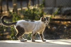 2018 new photo, cute stray cat walks around in autumn. 2018 new photo, cute street kitty walks around in autumn stock images