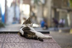 Street cat sleeping on the ground, looks like getting drunk stock photography