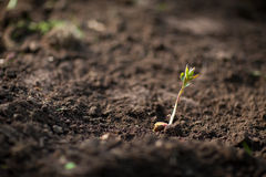 New plant Stock Photography
