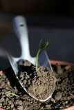 New plant. Growing from the soil Royalty Free Stock Photos