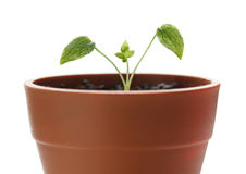 New plant beginning Stock Photos