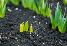New plant beginnings. Photo of new plant beginnings royalty free stock photos