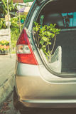New plant in car, happy gardening in holiday. Free times activity, happy single concept Stock Image