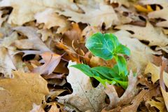 A new plant comes from the dried leaves Stock Images