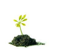 New plant concept Stock Photo