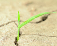 New Plant in Cracked Earth Royalty Free Stock Image